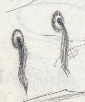 Hair Pulls.